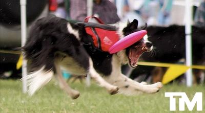 Way to Go Lassie!